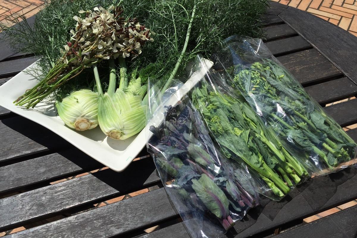 丹波の春野菜