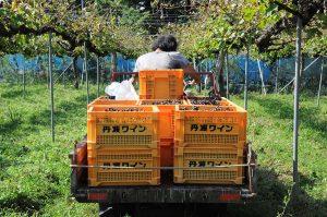 京都亀岡福岡農園