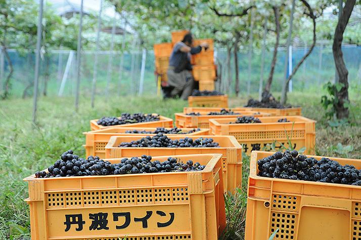 京都福岡農園
