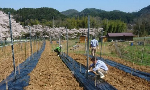 ぶどうの農園