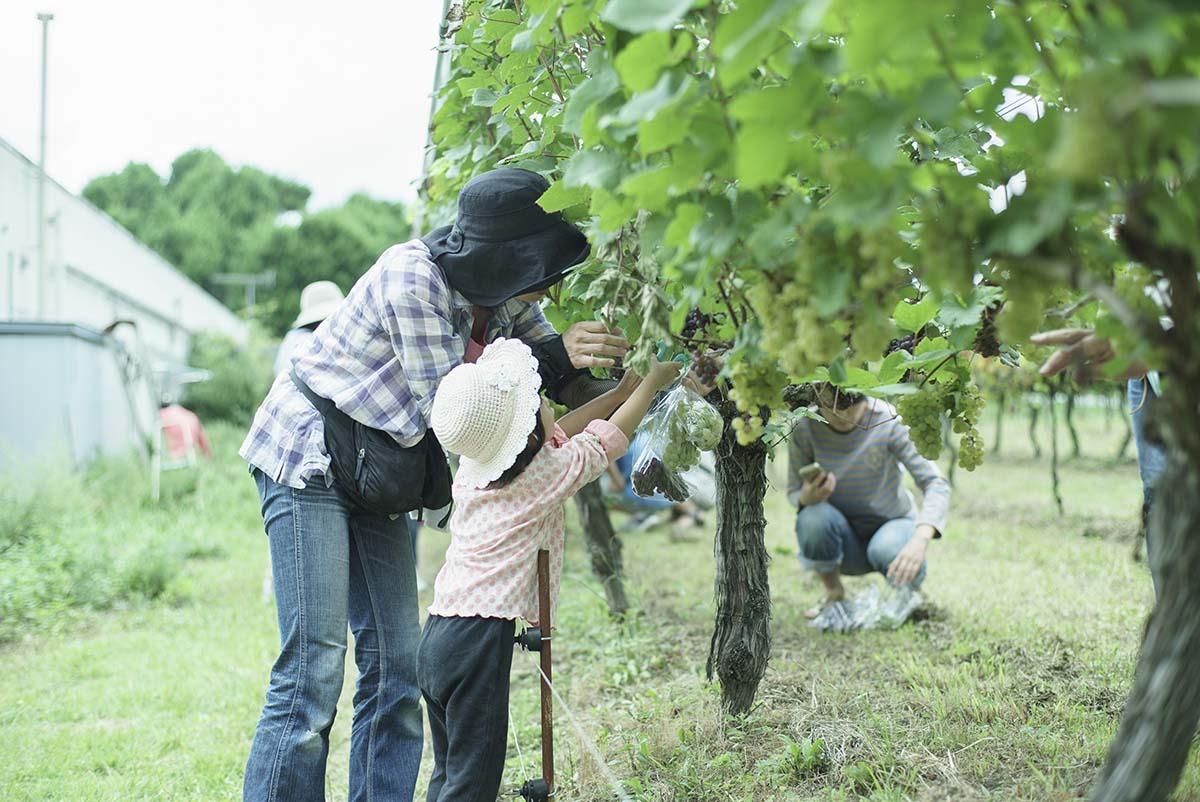 丹波ワイン収穫祭